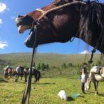 Paardrijdtocht Altai