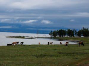 khovsgol meer - rondreis Mongolië