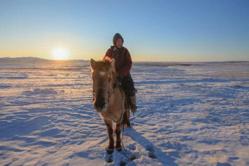 Mongolië paard