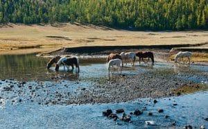 Orkhon Vallei - Mongolië - Mevo Reizen