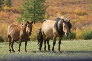 Terelj National Park - Flora en Fauna - Mevo Reizen