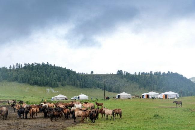 Paardrijtocht Terelj Nationaal Park