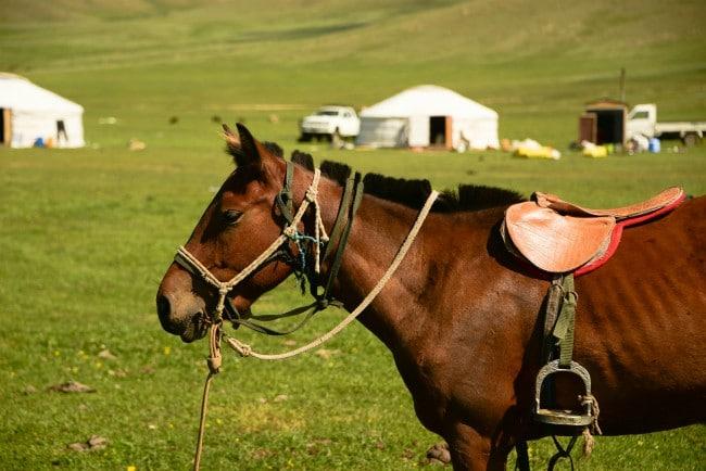 Paardrijden Terelj Nationaal Park