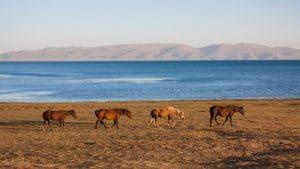 Son Kul meer - Kirgizië - Mevo Reizen